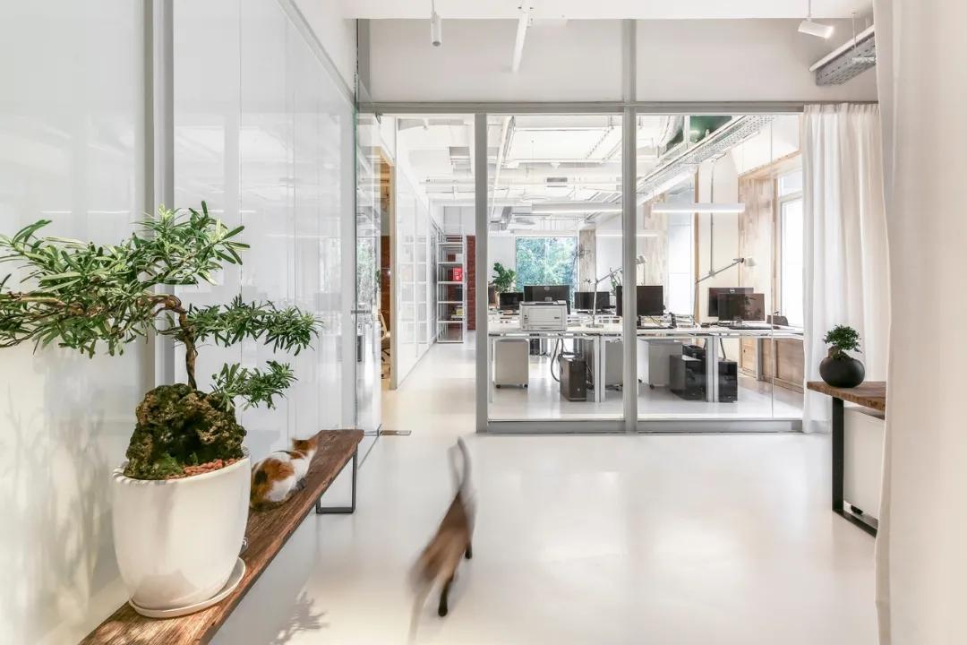 Bloom Design 绽放设计办公室